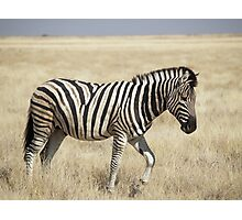 Super Zebra