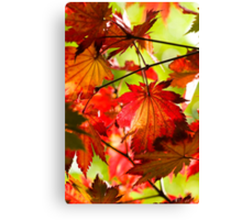 Arrival of Autumn Canvas Print