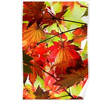 Arrival of Autumn Poster