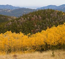 Colorado Aspen Autumn View Looking Out by Bo Insogna