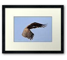 I Am Much Better Looking In Flight Framed Print