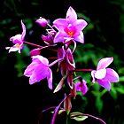 Wild Orchids by karolina