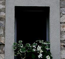 Windows Around The World 7 by Roddy Fitzgerald