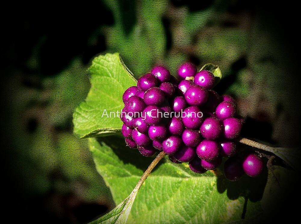 """Southern Autumn"" by Anthony Cherubino"