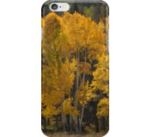 Golden Aspens - iPhone Case iPhone Case/Skin