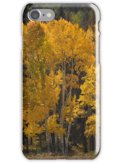 Golden Aspens - iPhone Case by Colleen Drew