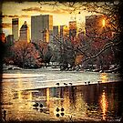 Central Park Looking Towards Fifth Avenue by Chris Lord