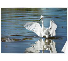 Snowy Egret Ballet Poster