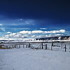Colorado Winter  by Chris Diebold