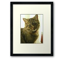 Did you get my good side? Framed Print