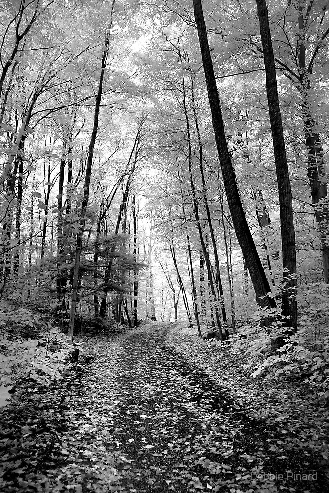 Through the Woods - Infrared by Debbie Pinard