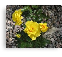 Sunshine Yellow Roses and White Wool Canvas Print