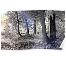 Cedars by the Lake - Sharbot Lake Ontario - Infrared Poster