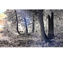 Cedars by the Lake - Sharbot Lake Ontario - Infrared Photographic Print