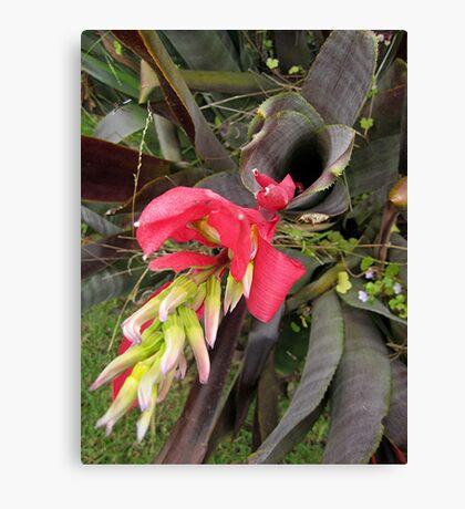 Bromeliad spear Canvas Print