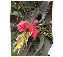 Bromeliad spear Poster