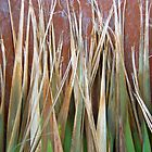 iPhone Case - Cordyline Leaves  by Orla Cahill Photography