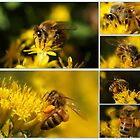 MY HONEY BEES IN A SEA OF YELLOW by Betsy  Seeton