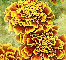 Golden Blossoms by Scott Mitchell