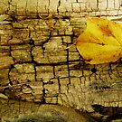 Yellow Leaf by jrier