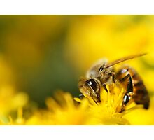 Honey Bee Photographic Print