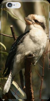 The Kookaburra by Kezzarama