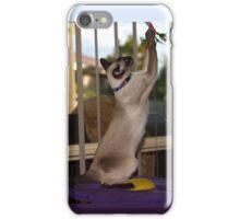 Tequilla the Siamese - iPhone case iPhone Case/Skin