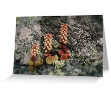 Umbilicus Rock Life Greeting Card