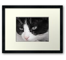 Hello There Kitty Cat Framed Print