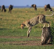 Cheetah Fastest Predator on Earth by Jill Fisher