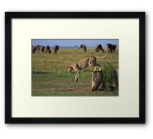 Cheetah Fastest Predator on Earth Framed Print