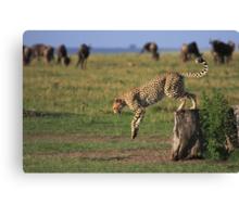 Cheetah Fastest Predator on Earth Canvas Print