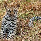 Leopard cub(All by myself mom!) by jozi1