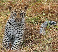 Leopard cub(All by myself mom!) by jozi1