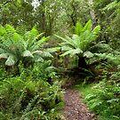 Tree Ferns. The Otways. by John Sharp