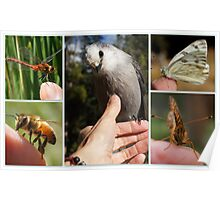 GETTING IN TOUCH WITH NATURE Poster