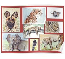 South African Wildlife collection Poster