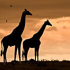 Courting Giraffe Silhouette by Jill Fisher