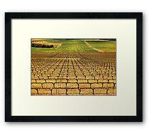 Ferngrove Vineyard Framed Print