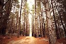 Light beyond the Trees by yolanda