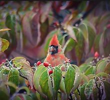 Red Cardinal Tree Topping by RockyWalley