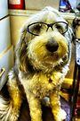 Doggles by Paul Thompson Photography
