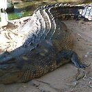 Australian Crocodile by LESLEY B
