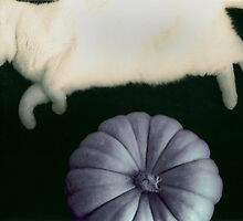 And the Cat Jumped Over the Pumpkin by Denise McDonald