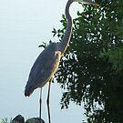 Florida Crane by tapiona