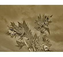 Foxgloves Photographic Print