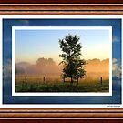 Clouds & Trees ! by Jan Siemucha