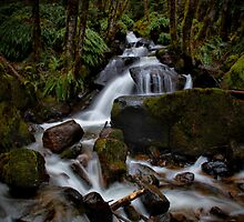 A Joy To The Eyes by Charles & Patricia   Harkins ~ Picture Oregon