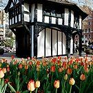 soho square by Bronwen Hyde