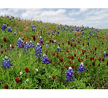 Bluebonnet  Red Clover and Indian Paintbrush Photographic Print